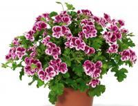 Для комнатных цветов