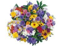 Семена садовые цветы
