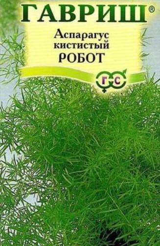 Аспарагус кистистый Робот /Гавриш/