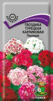 Гвоздика Турецкая Карликовая Пиноккио (0,3 г) /Поиск/