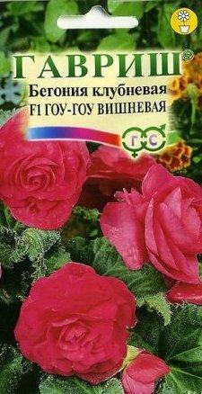 Бегония Гоу-гоу вишневая /Гавриш/