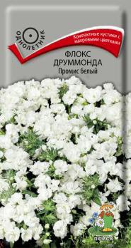 Флокс друммонда Промис белый (10 шт) /Поиск/