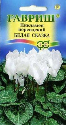 Цикламен персидский Белая сказка /Гавриш/