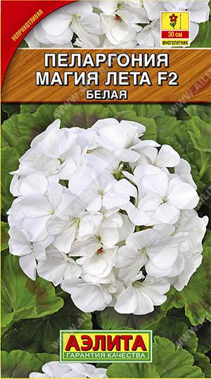 Пеларгония зональная Магия лета F2 белая  /Аэлита/