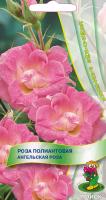 Роза полиантовая Ангельская Роза (5 шт) /Поиск/