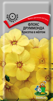 Флокс друммонда Красотка в жёлтом (0,1 г) /Поиск/