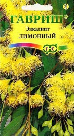 Эвкалипт лимонный Флагман /Гавриш/