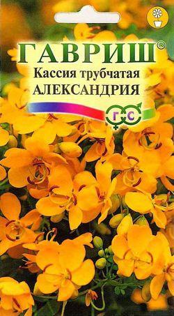 Кассия Александрия трубчатая /Гавриш/