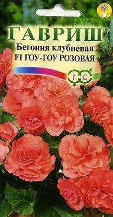 Бегония Гоу-гоу розовая /Гавриш/